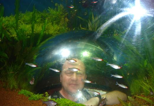 fishtank1